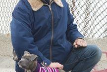 tom hardy with doggos