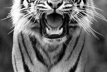 Animals :3