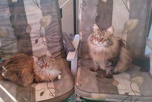 """Umarme-Deine-Katze-Tag / Heute ist der """"Umarme-Deine-Katze-Tag"""" Also, los geht´s: Gebt Eurer Katze einen Extra-Knutscher!"""