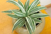 House plants, tips and care / by Tracy B