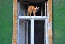 ablakos maccsok