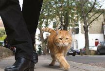 Bob gato incrível