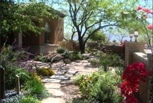 Desert Landscaping Awesome! / by Pamela Aamot