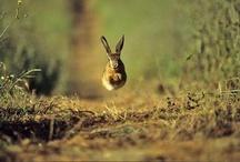 Hasen & Kaninchen