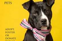 Adopt Don't Shop / Inspiring Rescue photos and stories
