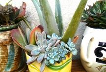 Republic of Succulents - Arrangements
