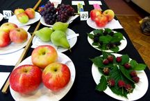 Fruit and Vegetables / Fruit and Vegetables from our Summer Shows