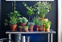 indoor garden / by Kari Ann Ramsey
