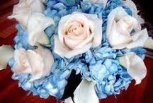 Wedding Flowers / by Tammy Petrarco