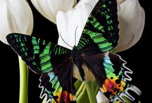 Butterflys are beautiful