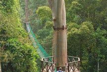 Travel Images - Borneo