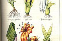 Fiori da cultivare