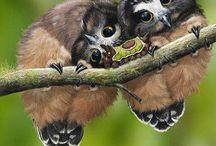 Mláďata sov