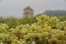 Vignes  / Raisins, vignes, paysages agricoles....