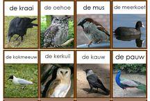 Natuuronderwijs