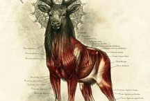 Antlers and Horns / by Bryan DeLae