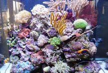 Aquariums marins / Créations d'aquariums d'eau de mer by Aquaria-France