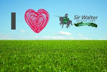 Sydney Lawn & Turf Supplies / marketing content for lawn solutions