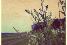 Photograndiose / by Joyce Collins-Baker