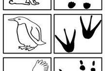 animal footprints/ ślady zwiarząt