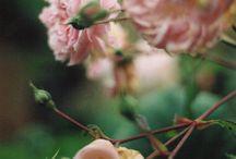 ROSES (la reine des fleurs)