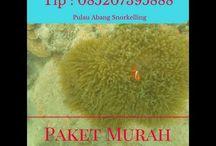Abang Island Snorkelling, Contact : 085207395888