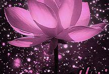 foto cu diferite flori