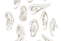 Anatomy Ears