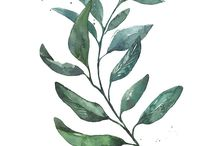 greenplants