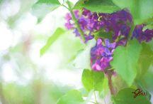 Maine Garden Photography