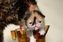 Babies / by Kathleen Ryan