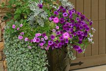 garden romantic