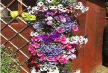 Blumensaüle