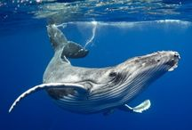 Animals of Water / Every thing that lives and grows around or under water