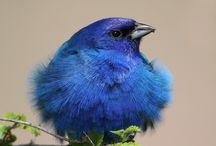 Birds / by Josephine Baker