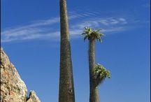 Bijzondere bomen en groeiwijzen