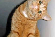 gatti!!.. ^^