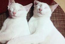 Snow & Winter hugging.... / Sleeping cat....