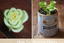 Regrow vegetables from scraps