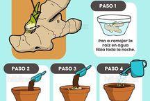 Cultivar / Siembra