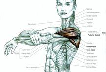 Anatomy / Know Your Body