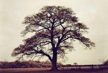 parks n trees