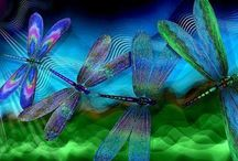 Dragonflies / by Charlotte Brown