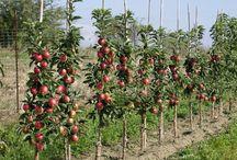 Garten   Obst + Gemüse