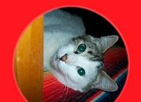 Animals & Pets Books / Books about animals and pets #children #animals #pets #dogs #cats