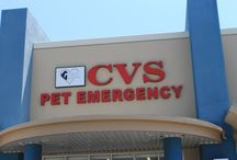 Animal Cancer Ontario - CVS: Ontario Location (909) 947-3600 / CVS: Ontario Location 2409 S. Vineyard Ave, Suite O Ontario, CA 91761 Phone: (909) 947-3600 http://www.cvsangelcare.com/   California Veterinary Specialists is a 24-hour specialty and emergency facility committed   to excellence in internal medicine, surgery and critical patient care. Our family of   specialists, dedicated emergency clinicians, and experienced staff, provide a unique team   approach to referral medicine.