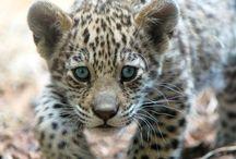 jaguar 4 anixi