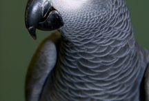 Birdies / by Dianne Rail