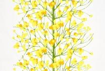 Yellow / by Tanya Pushkarow Kochergen