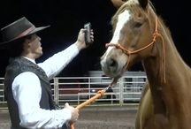 Horse Training Tips / Helpful hints, infographics and articles regarding the training and rehabilitation of horses.
